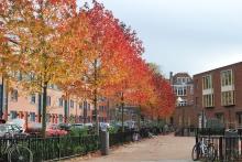 Autumn at Vierambacht